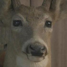 deer season_7752916716810421159