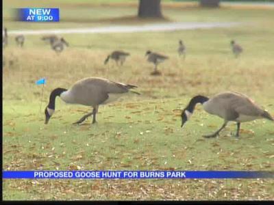 Burns Park proposes goose hunt_-9046890365536353371
