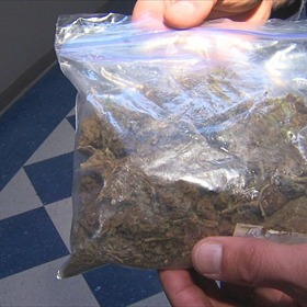 Marijuana used by Conway police officers for training exercise_1662450607420163921
