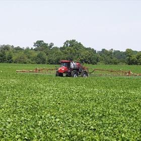Soybean Farm_2755488803171157967