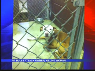 911 call released from deadly pit bull attack against owner_4672208334588103982
