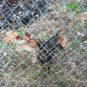 Greenbrier dogs_7905904624746252845