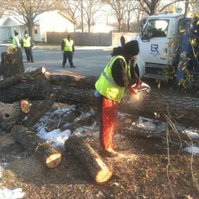 tree cut_263688103334986325