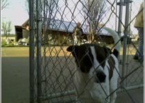 Animal Shelter Dog_-5440318408985326541