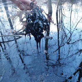 Oil in creek near Mayflower_-7311978546547113681
