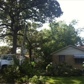 Tree on Home _3197239955035016885