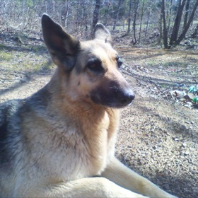 Perry County Dog poisoning_5195346504740193413