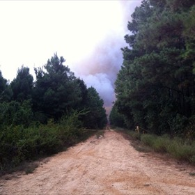 Drew County Wildfire_-8042826713171079831