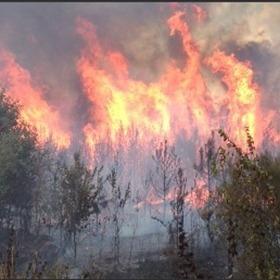 Drew County Wildfire_9219083481119212811