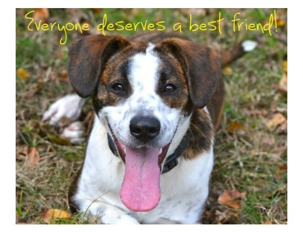 Everyone Deserves a best friend (Dog) photo for Humane Society of Pulaski County event._8799876524647730528