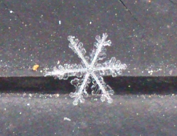 Snowflake on Feb. 6_2152500476547580813