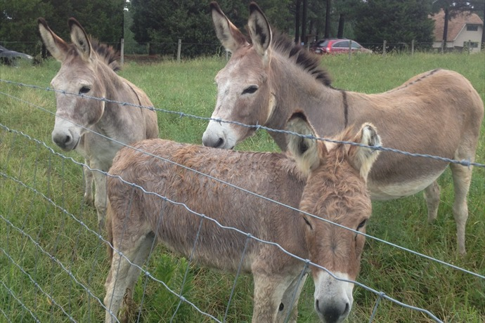Donkey Rescue in Faulkner County_8868991881917909251
