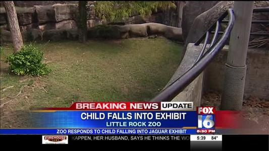 Zoo Responds to Child Falling Into Jaguar Exhibit_4564343691921673654