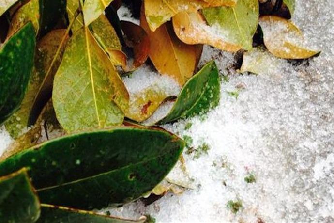 Arkadelphia ice Feb. 25_-8935038270905694580