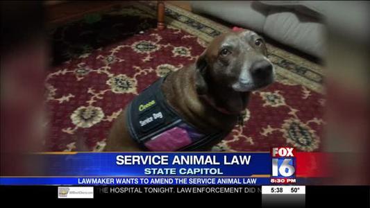Service Animal Law_-5620953952067236718