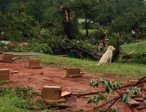 Howard County storm damage 3_8685832142019380379