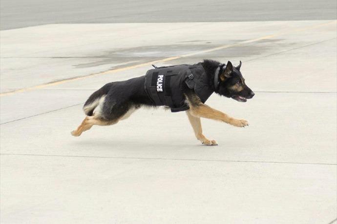 Photo of Vested Interest in K-9s, Inc. protective vest. (http__www.vik9s.org_)_-2154292996754617449