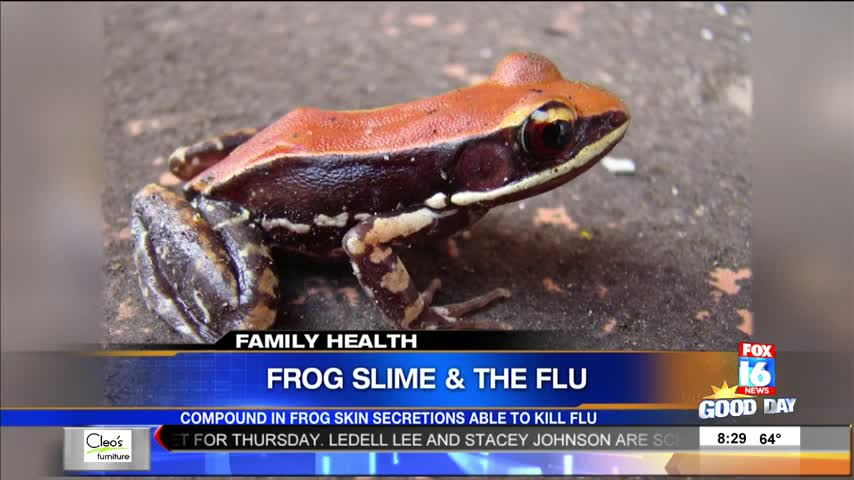 Family Health- Can Frog Slime Kill Cure the Flu-_22013075