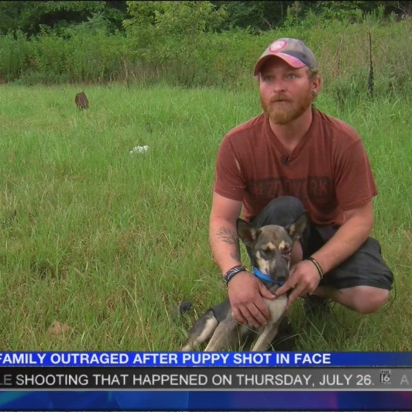 Family_Outraged_After_Puppy_Shot_in_the__0_20180731030219