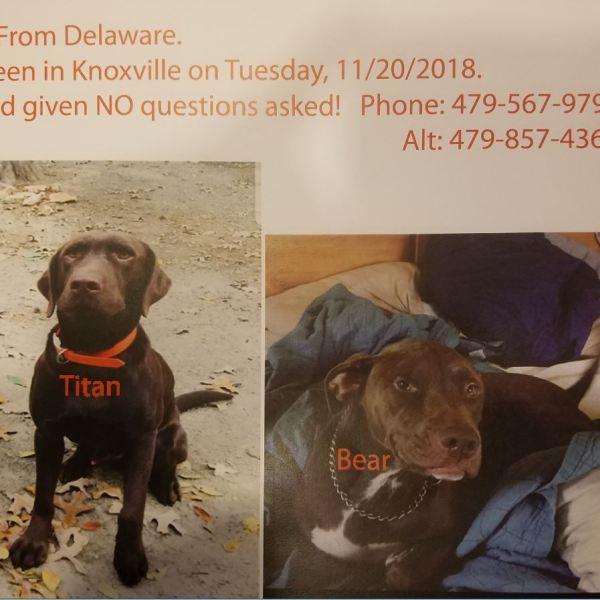 Missing Dogs_1543877994464.JPG-118809306.jpg