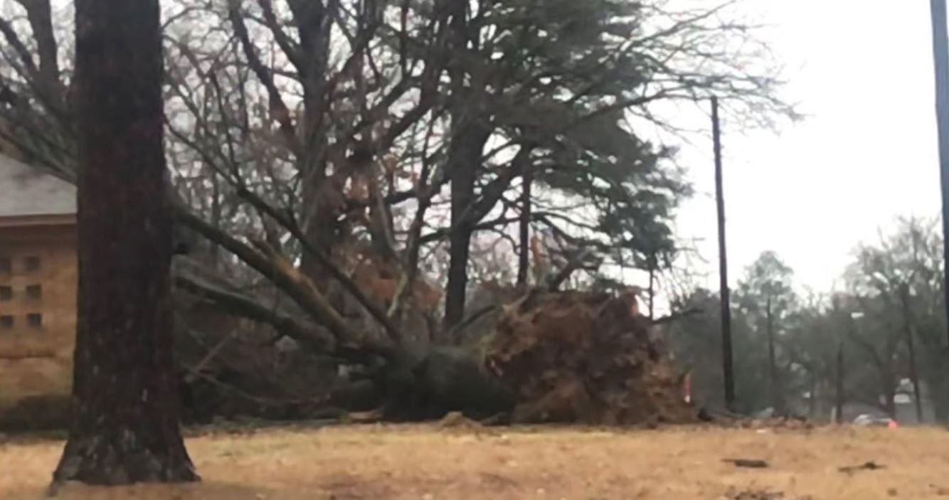 Cantrell Road tree down_1549555877641.JPG.jpg