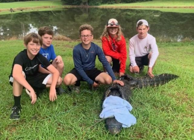 Gators spotted at Ashdown in backyard pond
